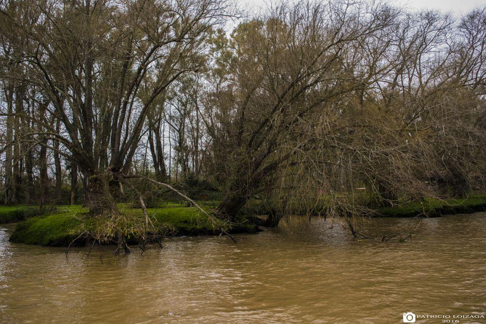 Photo in Landscape #river #tree #tigre #nature #argentina #landscape