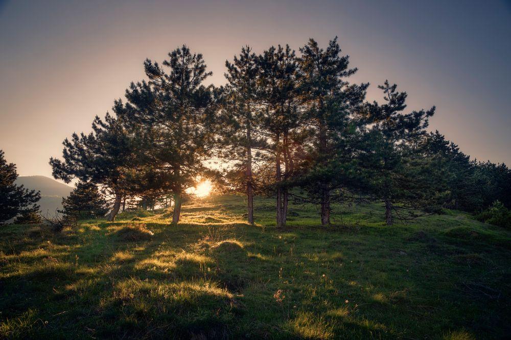 Photo in Landscape #suny trees