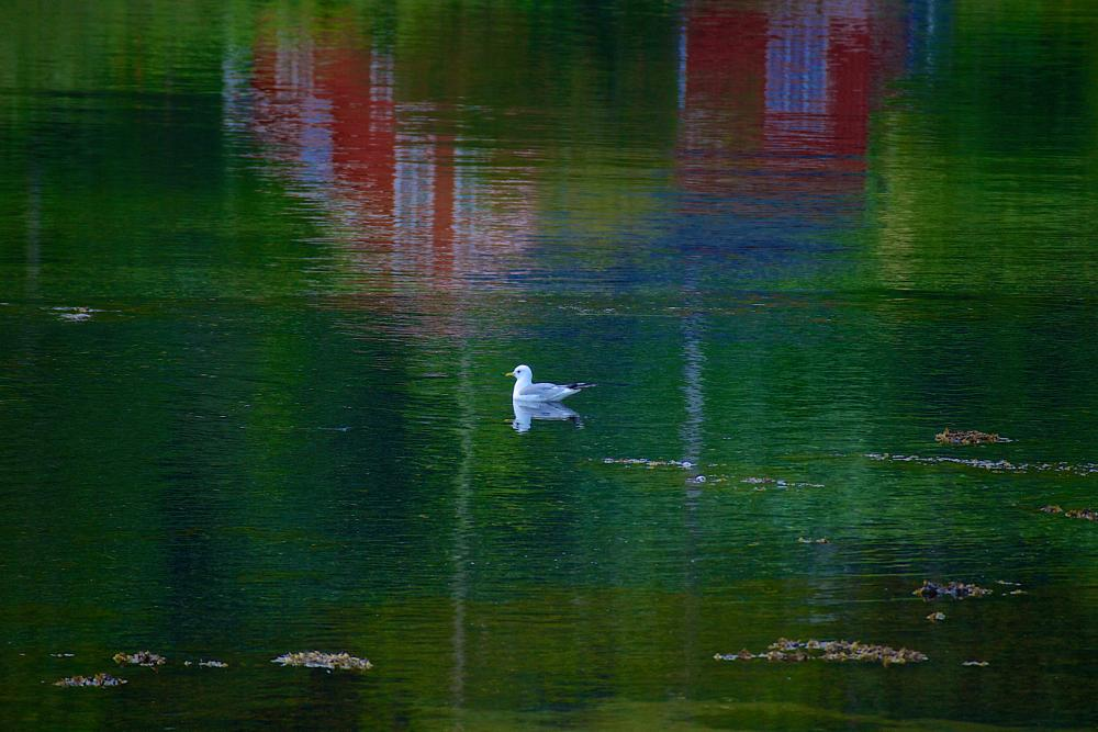 Photo in Animal #water #seagull #colors #palette #red #green #blue #white