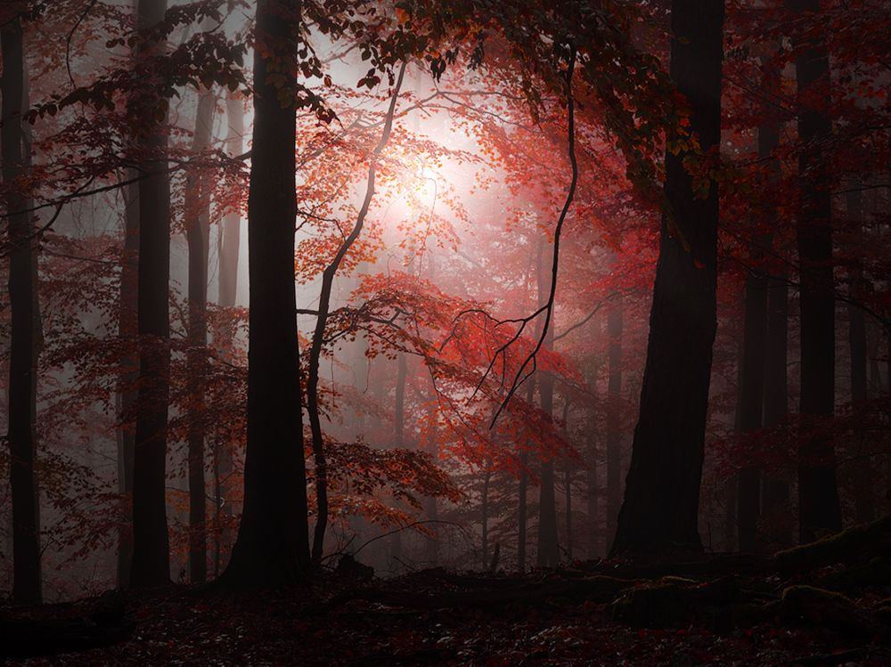 Photo in Landscape #red #gorest #autumn #ligth