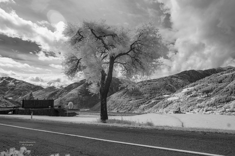 Photo in Black and White #landscape #infrared #alps #nature #road #tree #sky #clouds #black and white #2017