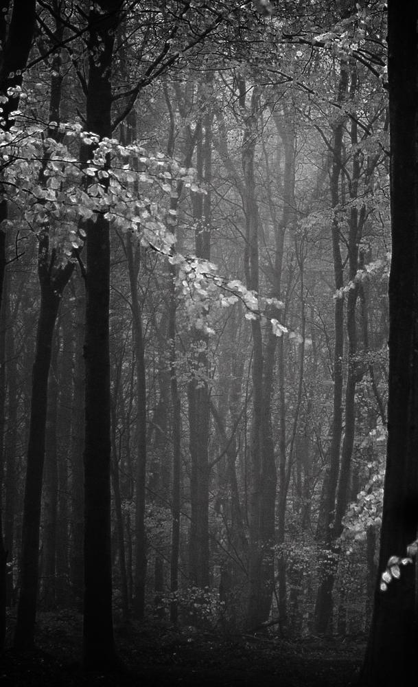 Photo in Black and White #woods #trees #forest #woodland #tree #black and white