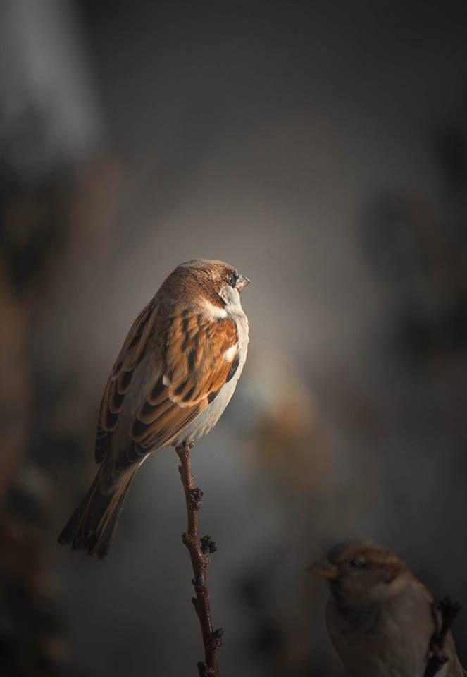 Photo in Animal #kuş #serçe #bird #nature #sonbahar