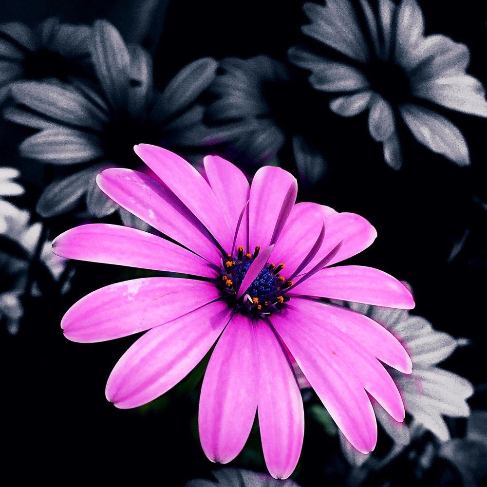 Photo in Random #pink #flower #love #live #adana #galeria