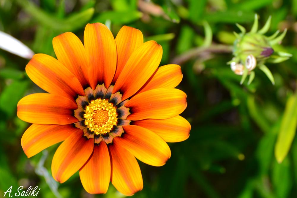 Photo in Nature #nikon #nikon d3100 #flower #nature #macro
