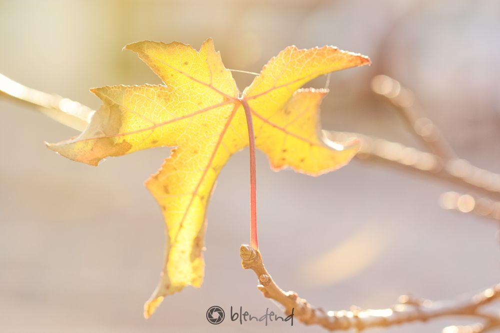 Photo in Nature #leaf in sunlight #leaf #sunlight