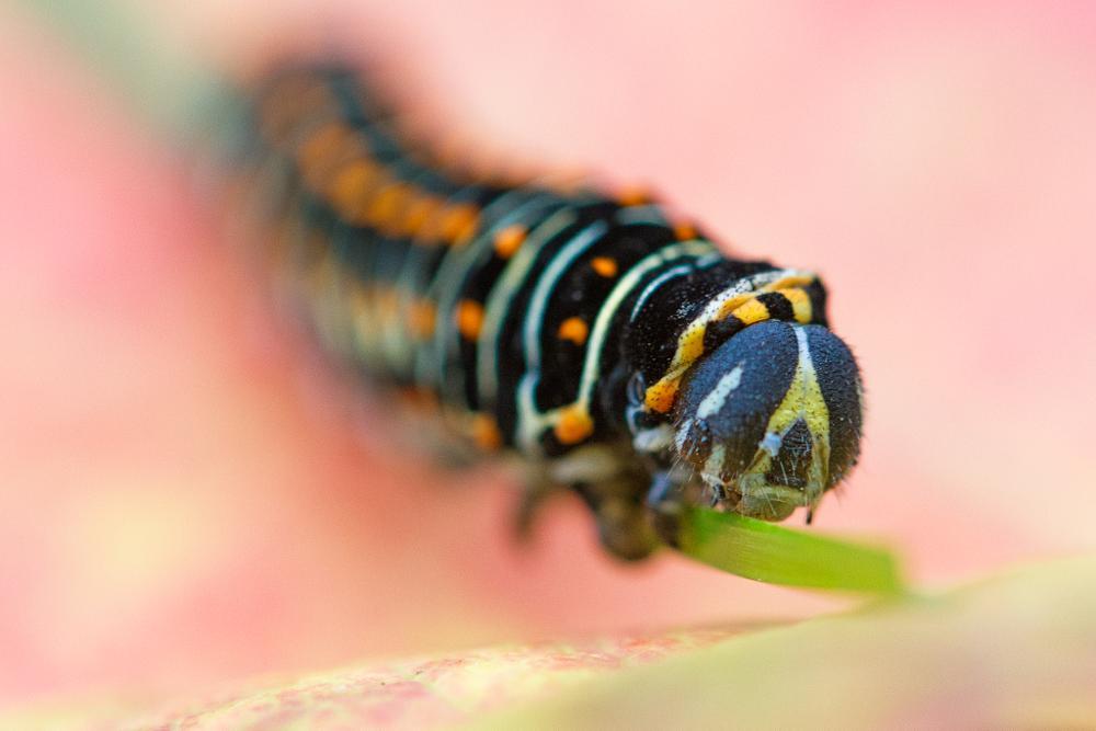 Photo in Nature #caterpillar #sursee #switzerland #lucerne
