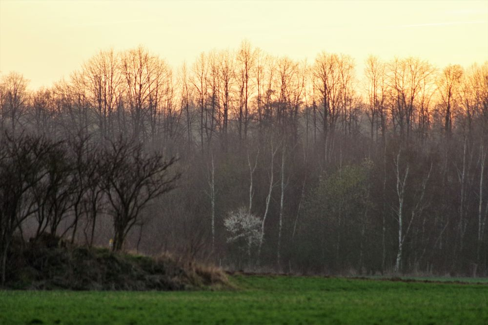Photo in Landscape #rural #nature #sky #evening #nightfall #forest #meadow #trees #eifel