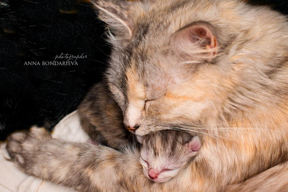 Photo in Animal #mother #maternity #cat #nursing