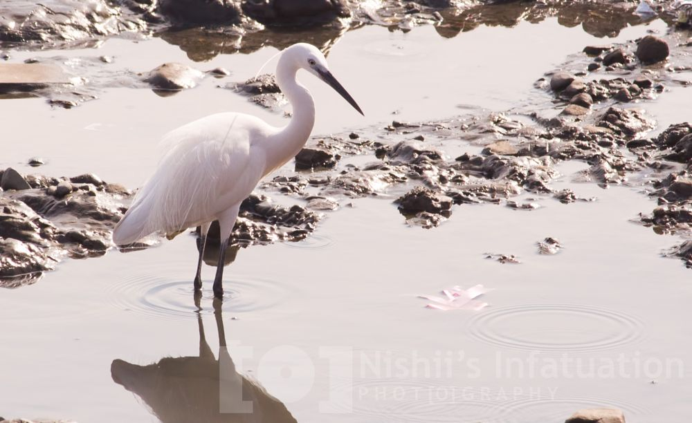 Photo in Animal #bird #water #sea #nature