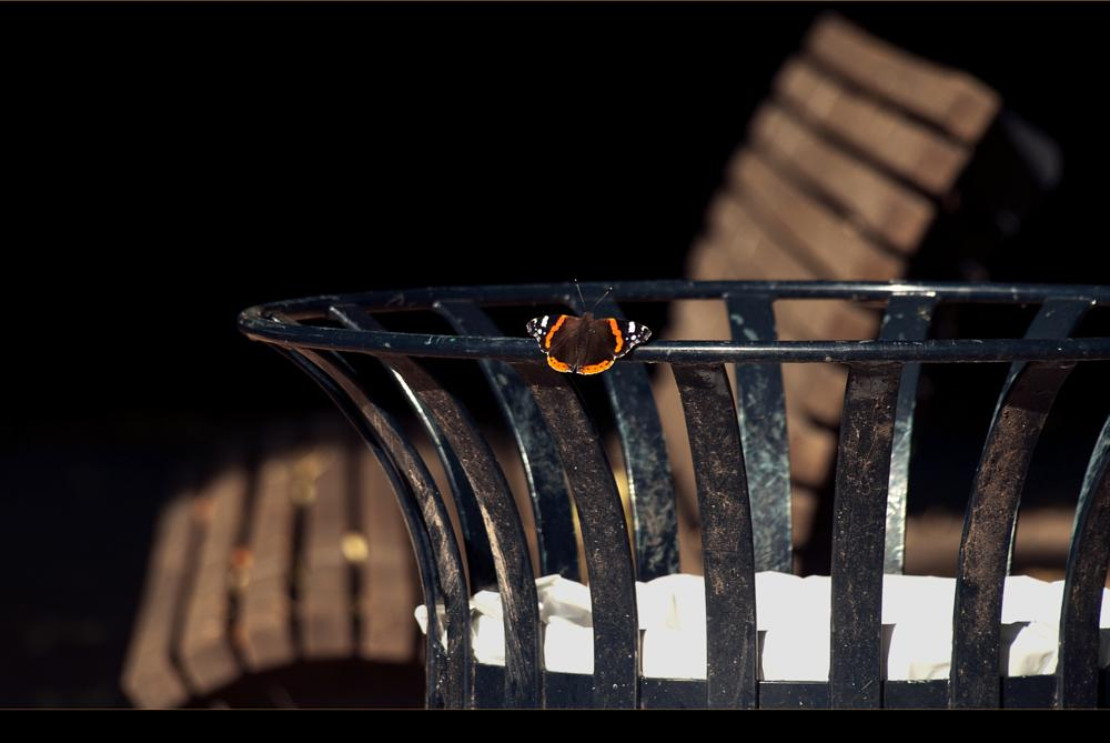 Photo in Random #butterfly #insect #animal #wastebin #urban #park #outdoors #colour