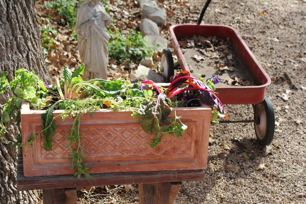 Photo in Random #drought #dead veggies #wagon #garden #planter