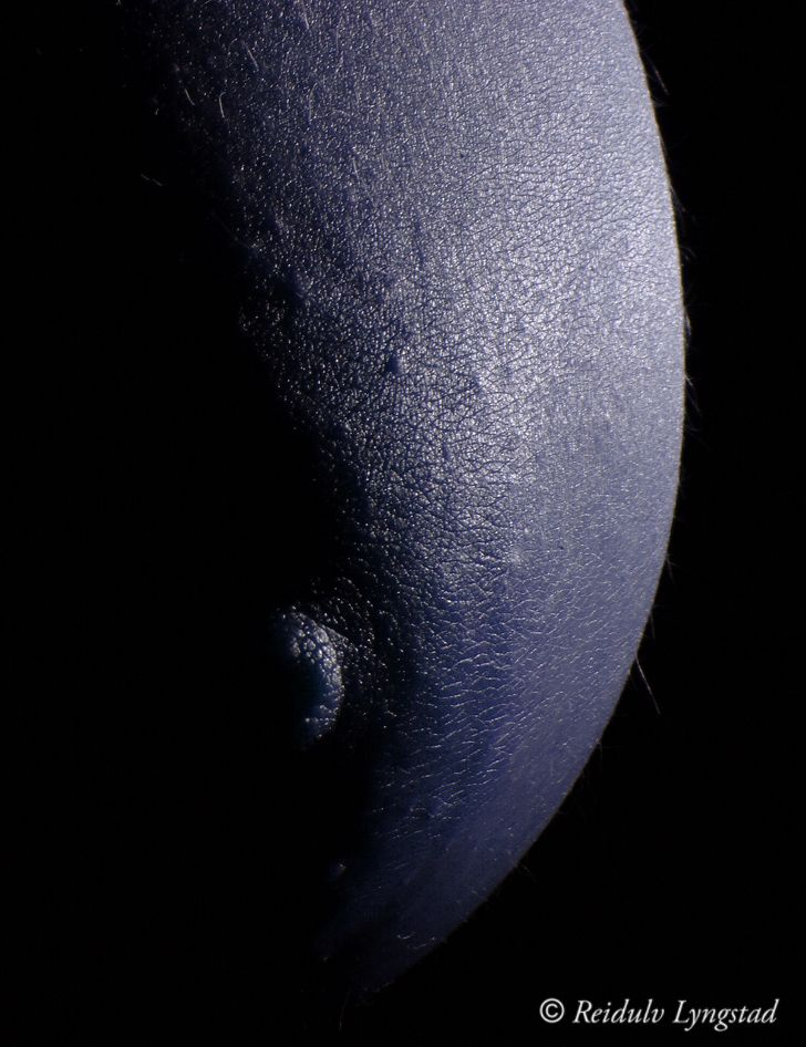 Photo in Nude #moon #blue #breast #nude #nu #nipple #abstract #body #bodyscape