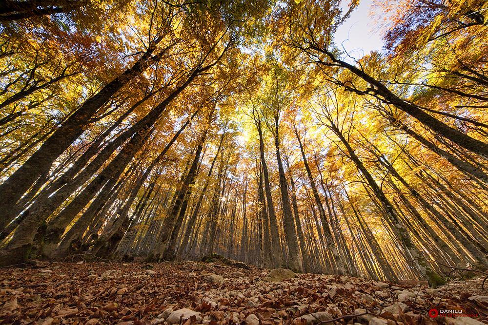 Photo in Landscape #autumn #landscape #trees #tree #woods #bosco #people #city #cityscape #canon #nikon #sun #flare #sunset #sunrise #sunshine #clouds #stone #paesaggio