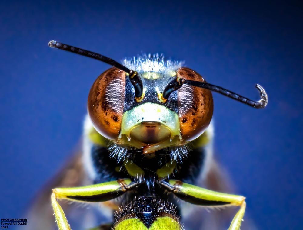 Photo in Macro #bee #macro #closeup