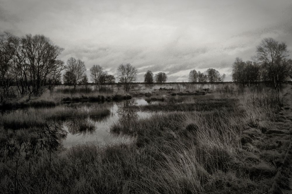 Photo in Black and White #water #grass #trees