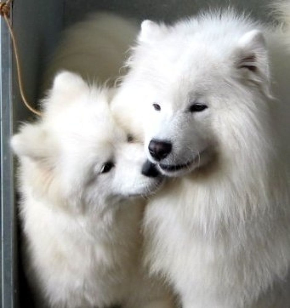Photo in Random #beautiful #dog