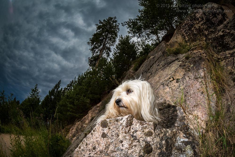 Photo in Random #2014 #bichon #bitzer #blau #buchsammy #canon ef 8-15mm 1:4 l fisheye  #eos 5d markiii #felsen #fisheye #haustier #havanese #havaneser #hund #hüfingen #hüfingen #jung #kirnbergsee #langhaar #mika #mischling #ralf #sonne #tier #weiss #action #animal #best friend #bester freund #canon #deutschland #dog #germany #himmel #joy #klein #long hair #outdoor #pet #quadruped #ralf bitzer photography #ralf bitzer photographyx #schwarzwald #spaß #unterbränd #vierbeiner #weiß #white