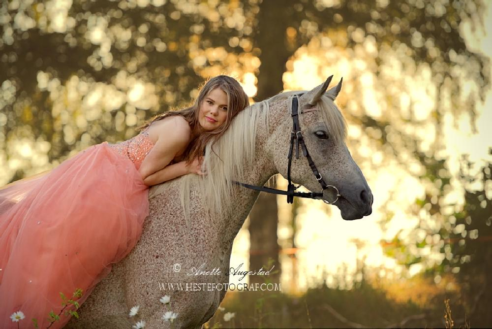 Photo in People #horse #light #eve #summer #arabian #mare #hest #paard #pferd #cavallo #caballo #cheval #equine #equus #equipage #equestrian #hestefotograf #girl #norwegian