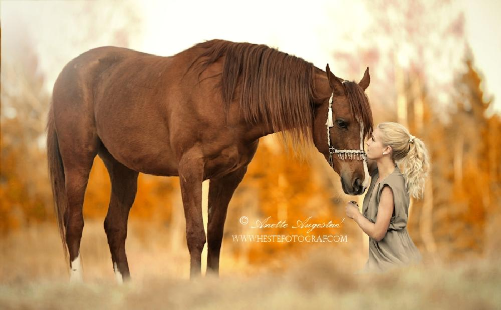 Photo in Animal #arabian #horse #pirebred #equine #equus #hestefotograf #equiphoto #pferd #cavalo #caballo #cheval #paard #norway #norwegian #model #girl #horsewhisperer #fux #animal #trust #bond #friendship