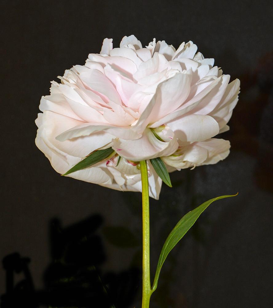 Photo in Nature #flower #white #black