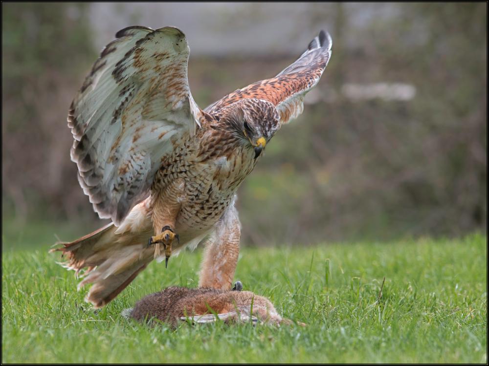 Photo in Animal #strike #bird #animal #birds