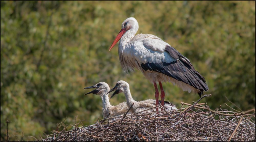 Photo in Animal #stork #younlings #birds #wildlife