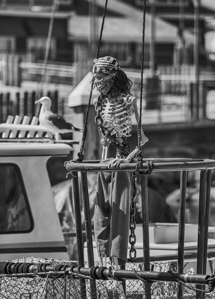 Photo in Street Photography #skeleton #pirate #boat #redondo beach #mike hope #michael hope #female #seagull