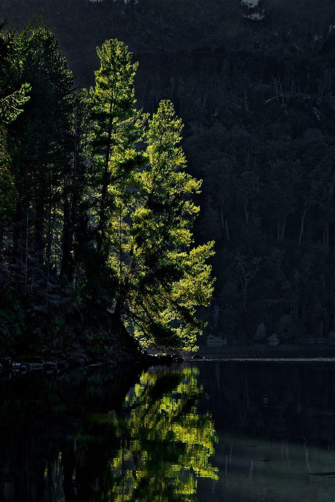 Photo in Landscape #tree #light #water #lake #shore #coast #christmas