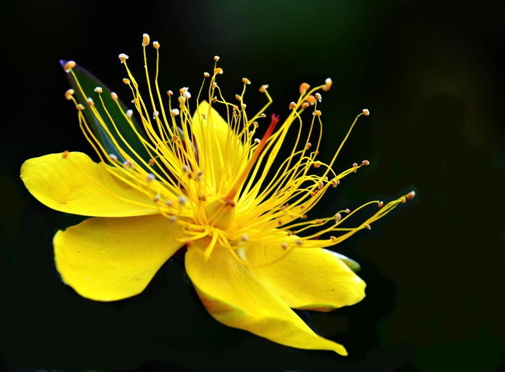Photo in Macro #flower #yellow #magical #outstanding #nature #macro #black #beautiful
