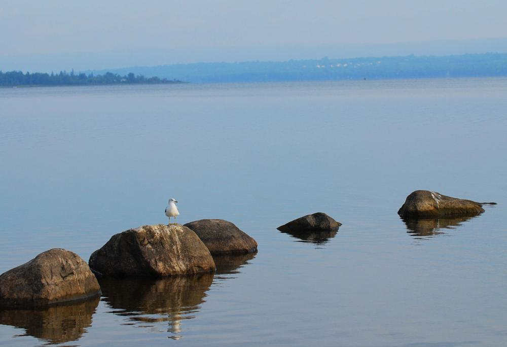 Photo in Landscape #gull #river #morning #calming #canada