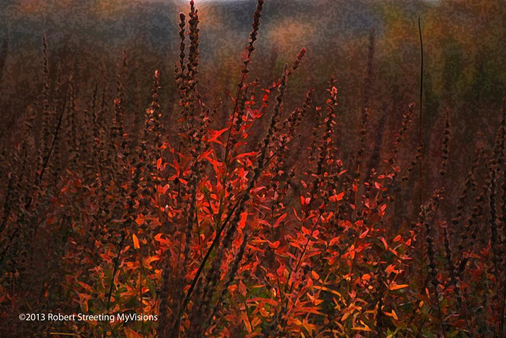 Photo in Random #color #nature #red #canada