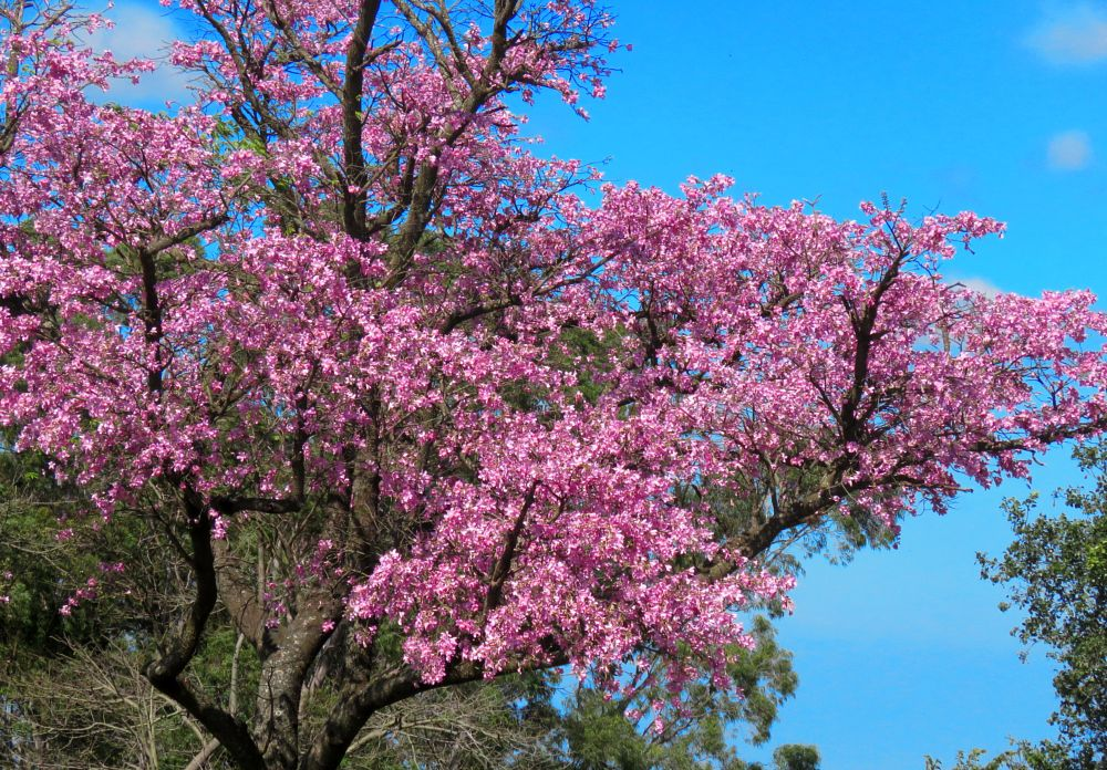Photo in Nature #cotton #tree #bewiahn #nature