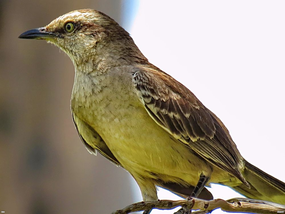 Photo in Nature #nature #garden #bird