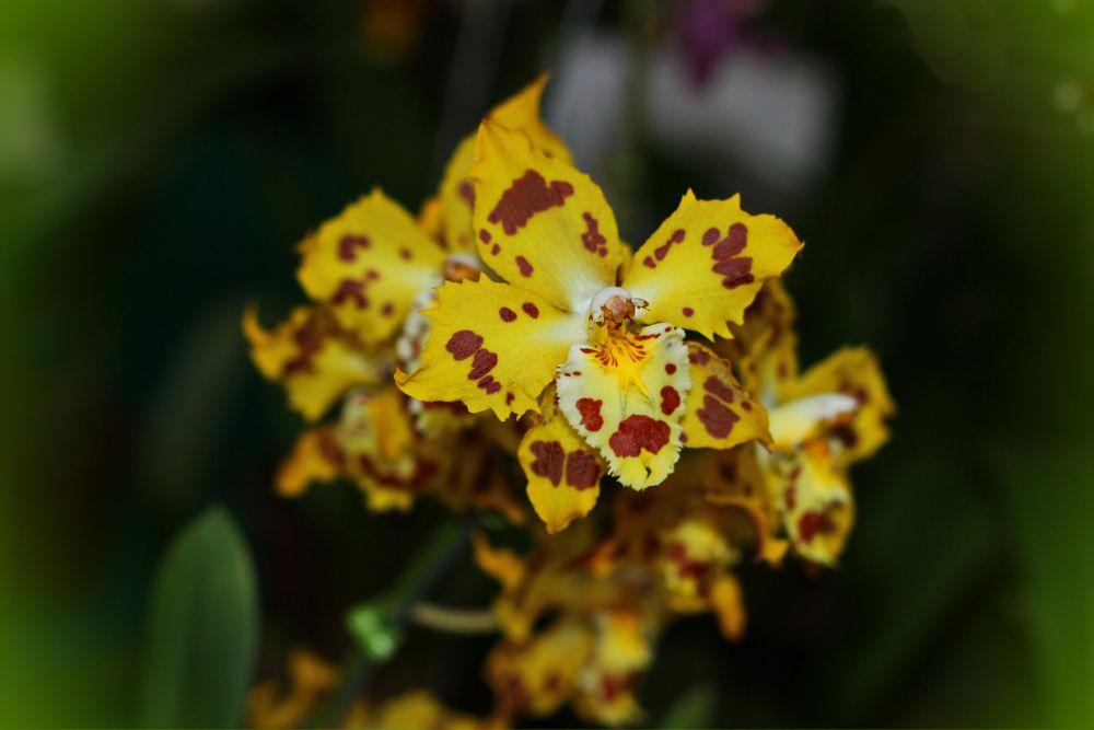 Photo in Macro #nature #garden #orchids #macro #bewiahn