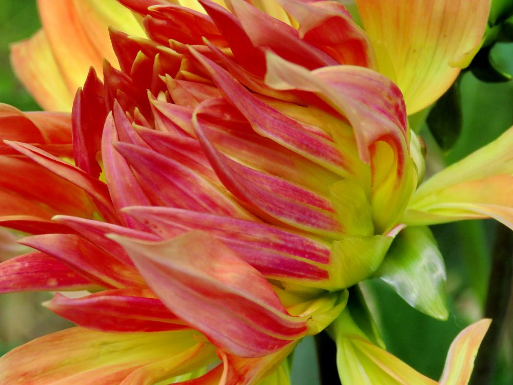 Photo in Macro #nature #bewiahn #macro #flowers