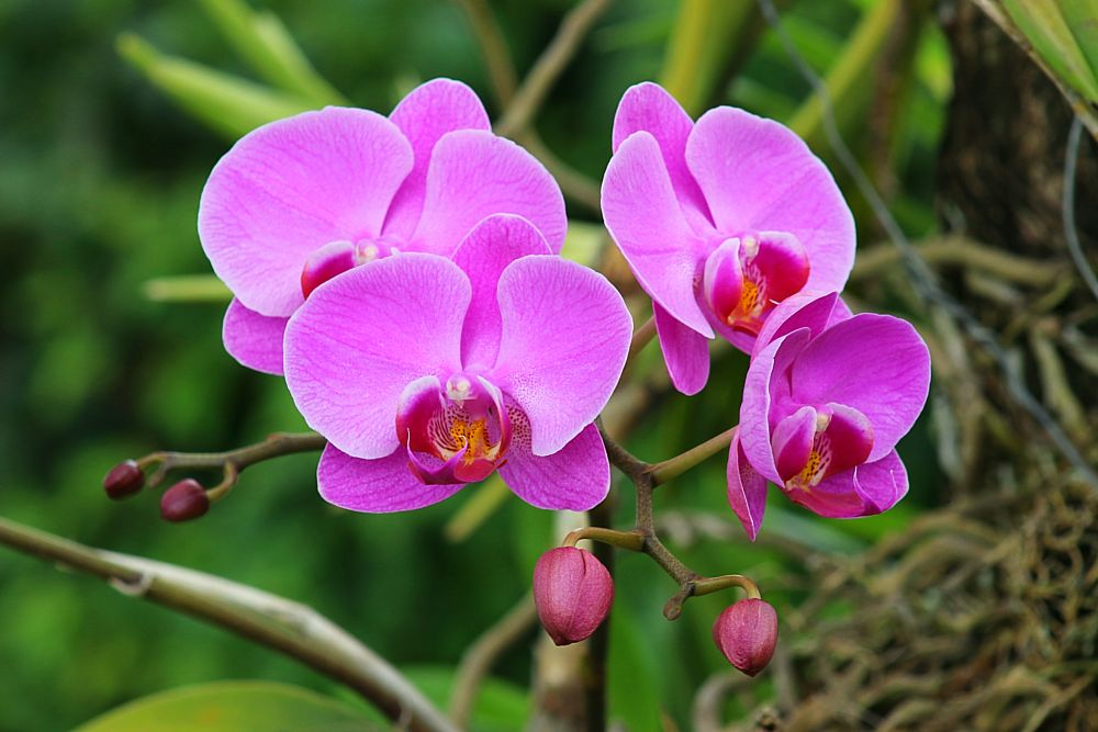 Photo in Nature #nature #flowers #garden #orchids