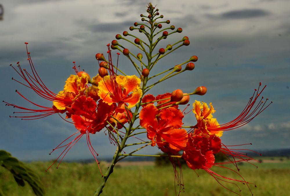 Photo in Nature #nature #macro #flowers #bewiahn