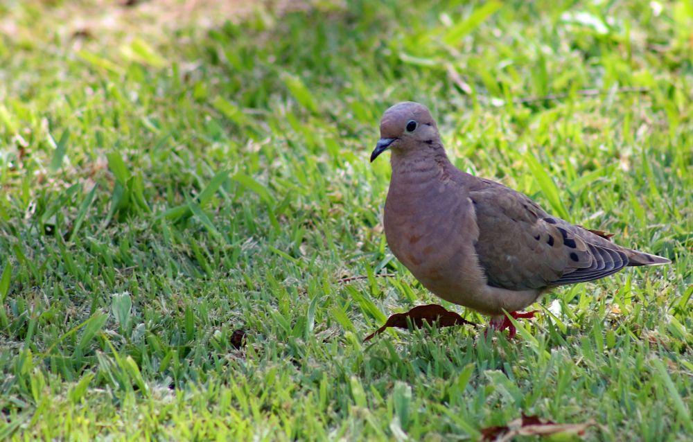 Photo in Nature #nature #dove #bewiahn