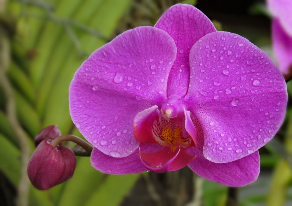 Photo in Nature #nature #garden #flowers #orchids