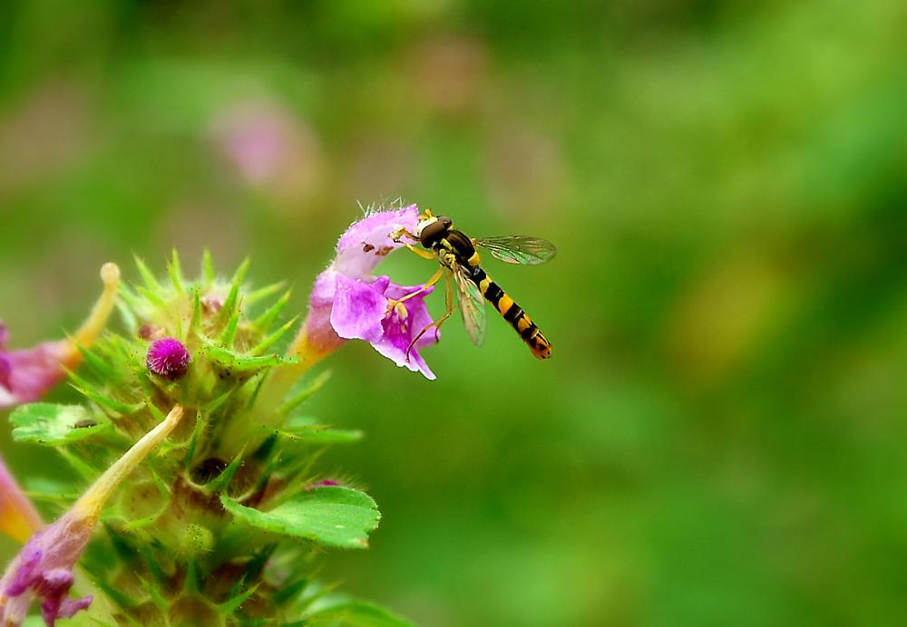 Photo in Macro #insects #wasps #bugs #nature #macro