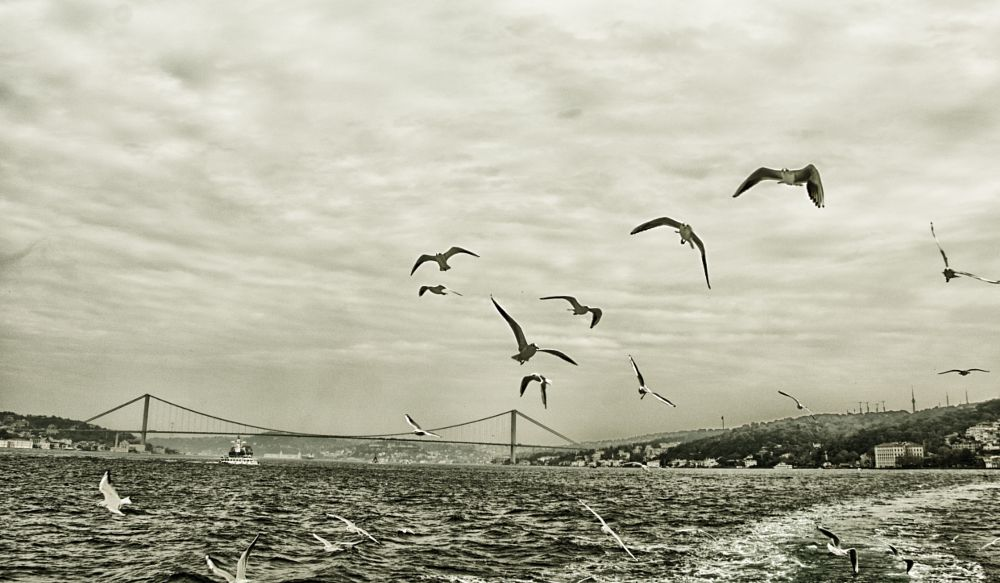 Photo in Black and White #istanbul #bosporus #bridge
