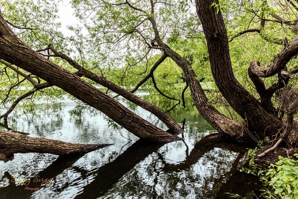Photo in Nature #sergey sergaj #pond #wild #trees