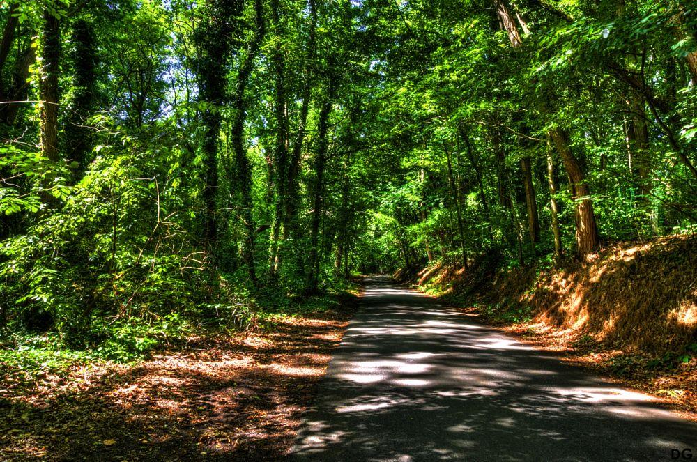 Photo in Landscape #landscape #road #trees #pentax #hdr #photomatix