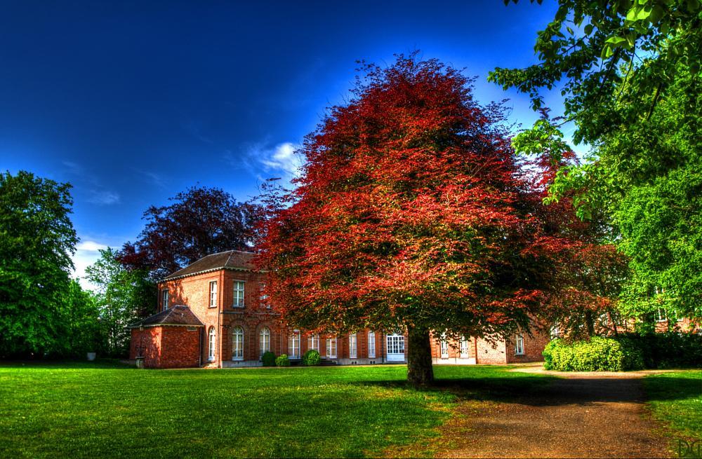 Photo in Landscape #landscape #tree #park #hdr #pentax #photomatix
