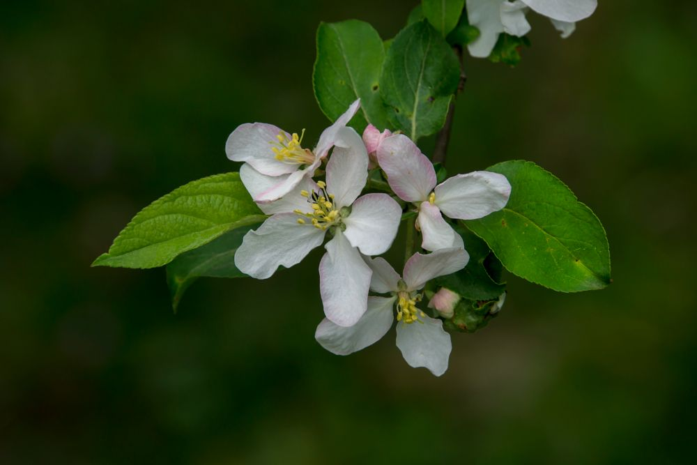 Photo in Nature #blossom #flower #flora #park #tree