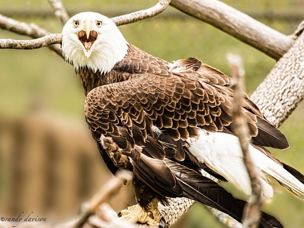 Photo in Animal #eagle #bird #animal