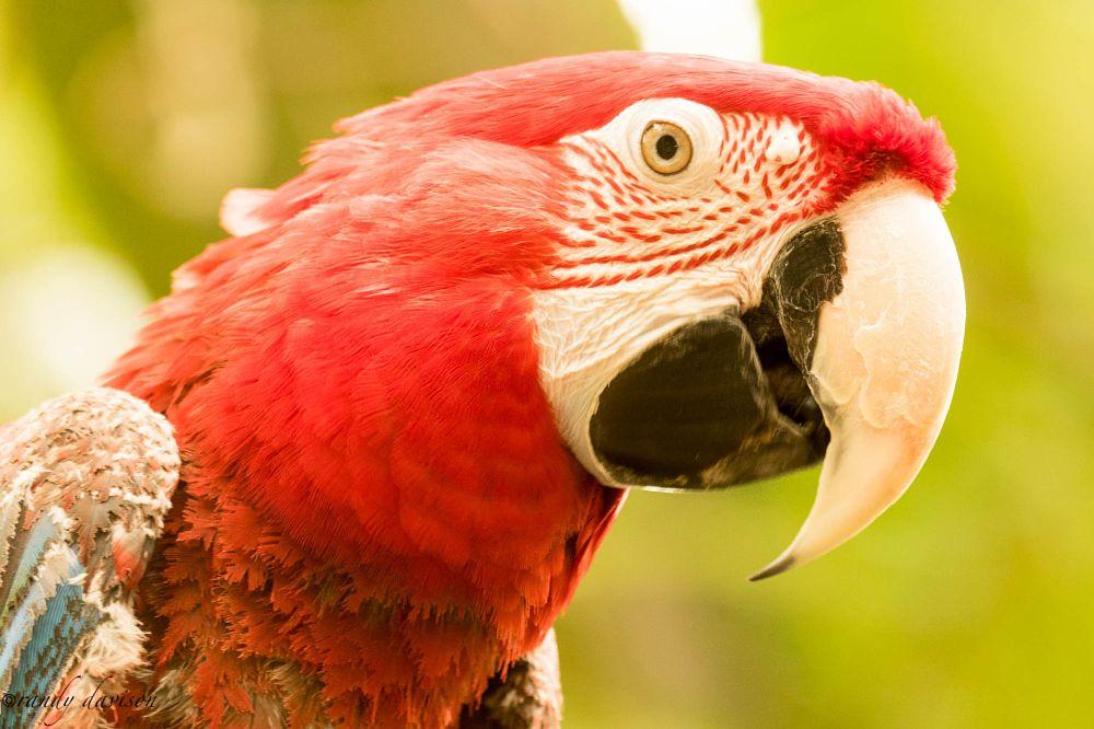 Photo in Animal #animal #mccaw #bird