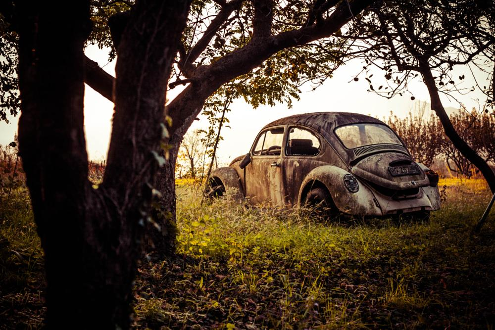 Photo in Landscape #beetle #car #nature #forest