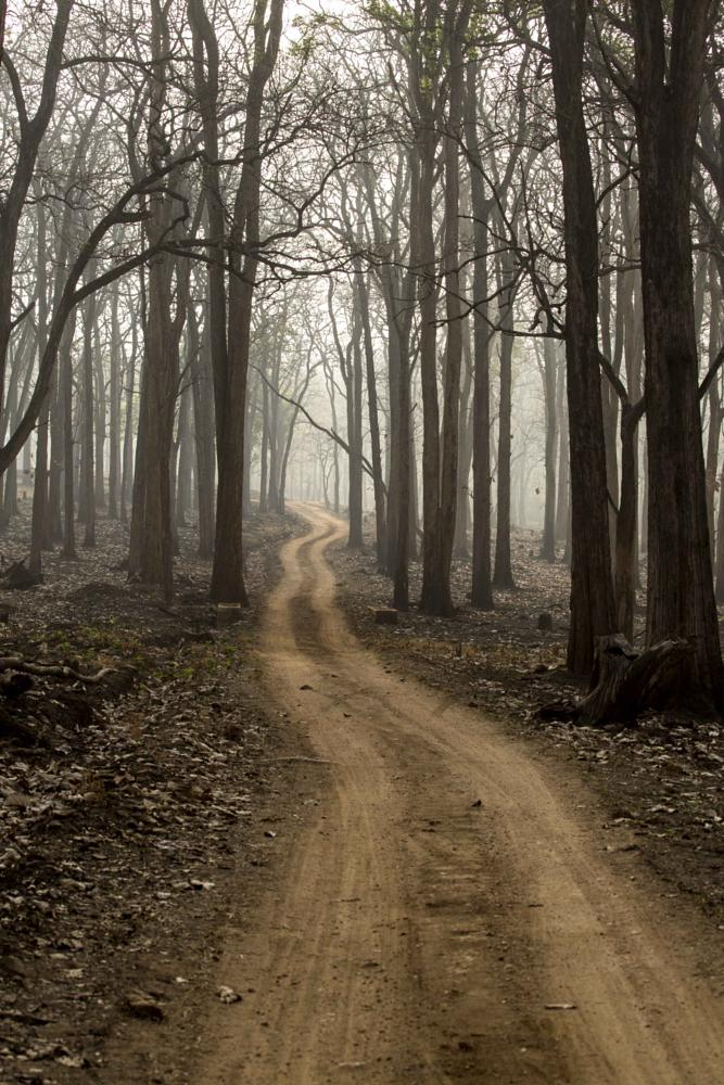 Photo in Landscape #forest #track #kabini